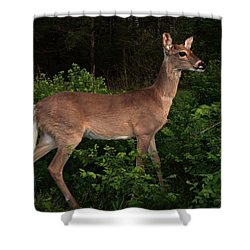 Just A Deer Shower Curtain by Bill Stephens