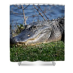 Shower Curtain featuring the photograph Just A Few Steps Closer Dear by Roena King