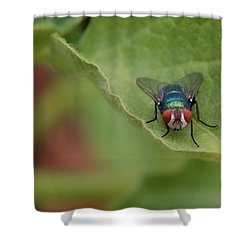 Just A Fly Shower Curtain