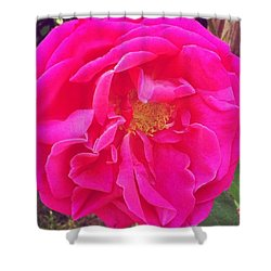 Just A Rose...#floral #flowers #pink Shower Curtain by Jennifer Beaudet