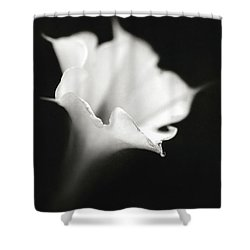 Shower Curtain featuring the photograph Just A White Flower by Eduard Moldoveanu