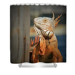 Shower Curtain featuring the photograph Just Around The Corner by Pamela Blizzard