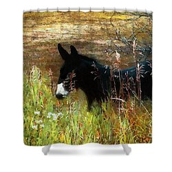 Just Chillin' Shower Curtain by RC DeWinter