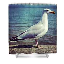 Just Chillin #seagull Shower Curtain