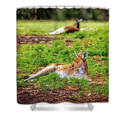 Just Chillin, Yanchep National Park Shower Curtain