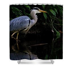 Just Fishing Shower Curtain by Brian Roscorla