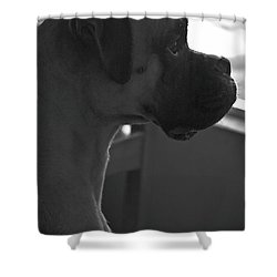 Just Handsome Shower Curtain by DigiArt Diaries by Vicky B Fuller