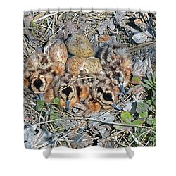 Just Hatched American Woodcock Chicks Shower Curtain by Asbed Iskedjian