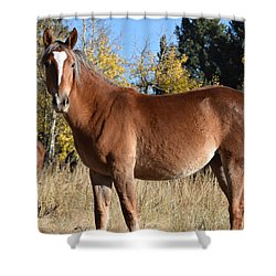 Horse Cr 511 Divide Co Shower Curtain