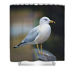 Shower Curtain featuring the photograph Looking Forward by Cindy Lark Hartman