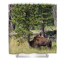 Shower Curtain featuring the photograph Just One More by Charles Robinson