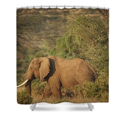 Shower Curtain featuring the photograph Just Passing Through by Gary Hall