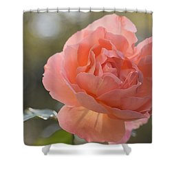 Shower Curtain featuring the photograph Just Peachy by Julie Andel