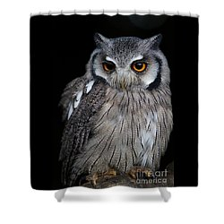 Just Waiting Shower Curtain by Gary Bridger