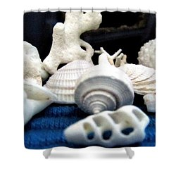 Just White Seashell 1 Shower Curtain