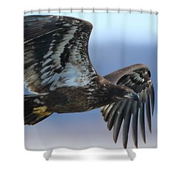 Shower Curtain featuring the photograph Juvenile Bald Eagle by Coby Cooper