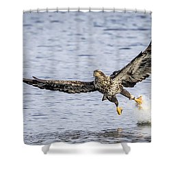 Juvenile Bald Eagle Fishing Shower Curtain by Ricky L Jones