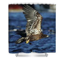 Shower Curtain featuring the photograph Juvenile Bald Eagle Over Water by Coby Cooper