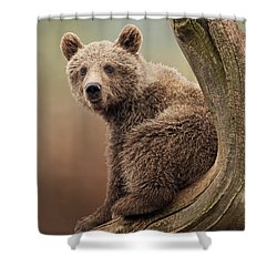 Juvenile Brown Bear - 365-5 Shower Curtain by Inge Riis McDonald