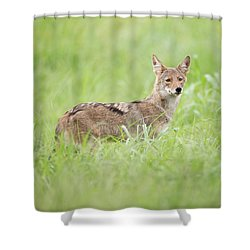 Juvenile Coyote Shower Curtain