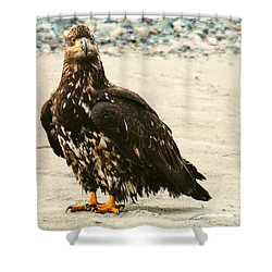 Juvenile Eagle On The Ice Shower Curtain by Myrna Bradshaw