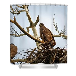 Juvenile Eagles Shower Curtain