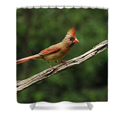 Juvenile Female Cardinal Shower Curtain