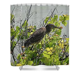 Shower Curtain featuring the photograph Juvenile Heron In Tree by Pamela Walton