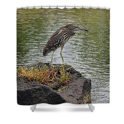 Shower Curtain featuring the photograph Juvenile Heron by Pamela Walton