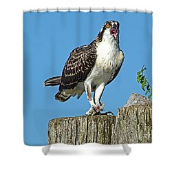 Juvenile Osprey#1 Shower Curtain by Geraldine DeBoer