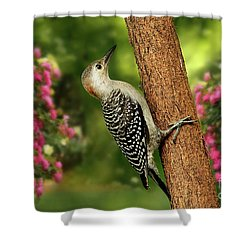 Shower Curtain featuring the photograph Juvenile Red Bellied Woodpecker by Darren Fisher