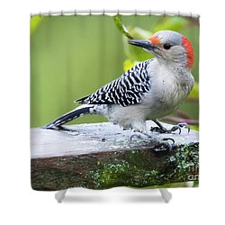 Shower Curtain featuring the photograph Juvenile Red-bellied Woodpecker In The Rain by Ricky L Jones
