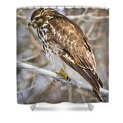 Shower Curtain featuring the photograph Juvenile Red-shouldered Hawk  by Ricky L Jones