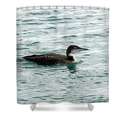 Juvenile Red Throated Loon Shower Curtain