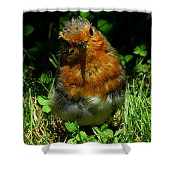 Juvenile Robin 2 Shower Curtain
