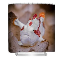 Juvenile Warty Frogfish Shower Curtain