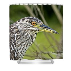 Juvi Black-crowned Night Heron Shower Curtain