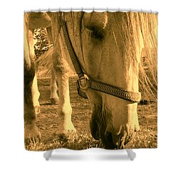 Kahn I Shower Curtain