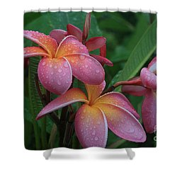 Kaikena Dreams Melia Aloha Keanae Shower Curtain by Sharon Mau