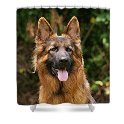 Kaiser - German Shepherd Shower Curtain