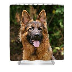 Kaiser - German Shepherd Shower Curtain by Sandy Keeton