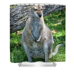 Shower Curtain featuring the photograph Kangaroo by Patricia Hofmeester