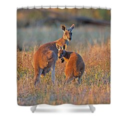 Kangaroos Shower Curtain
