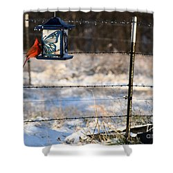 Shower Curtain featuring the photograph Kansas Cardinal At The Feeder by Mark McReynolds