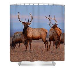 Kansas Elk 2 Shower Curtain by Keith Stokes