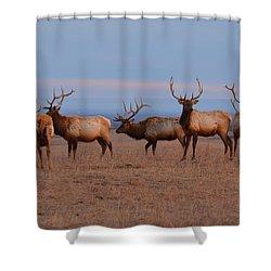 Kansas Elk Panarama Shower Curtain by Keith Stokes