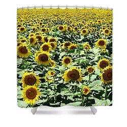 Kansas Sunflower Field Shower Curtain