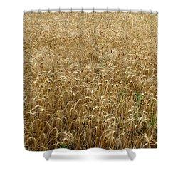 Kansas Wheat Shower Curtain