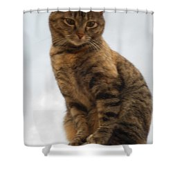 Kat Soop Shower Curtain by Sheri Keith
