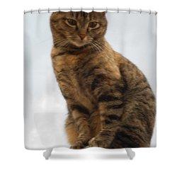Kat Soop Shower Curtain